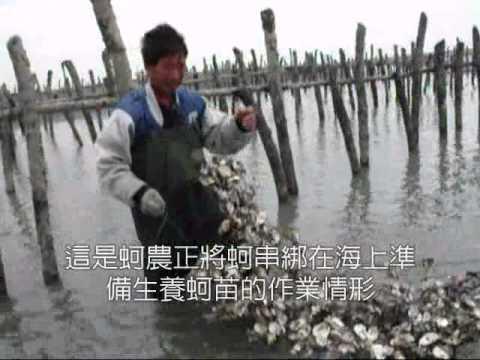 台西人與海為伍 養蚵人家生活苦 - YouTube
