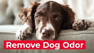 How to Remove Dog Odor From Your Home