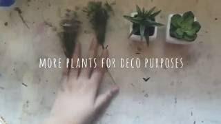 Easy DIY terrarium | Bedroom deco/inspo