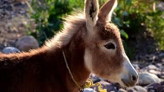 Donkey Ringtone | Free Ringtones Downloads