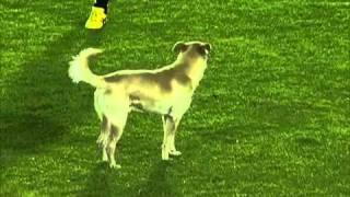 Cachorro invade campo e a torcida grita olé - Santa Fé 4x1 Botafogo - 2011