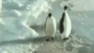 Hey! Mate Wassup|Penguin slapping his Bruh|Funny Clip