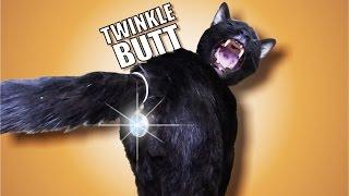 Talking Kitty Cat 42 - Twinkle Butt