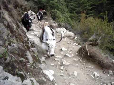 Everest Base Camp Trek 2009 part 2