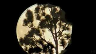 Gregory Alan Isakov - That Moon Song