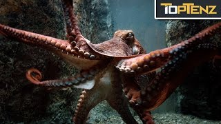 Top 10 TERRIFYING Facts About OCTOPUSES