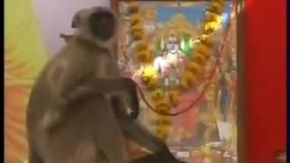 Hanumanji Visits Ram Katha