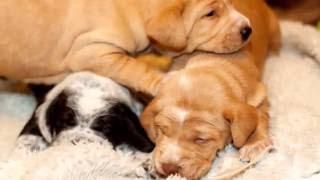 my puppies photography slide show - Fotos de mis cachorros - presentación de diapositivas