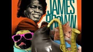 Foca da meia-noite - I Feel Good (James Brown)