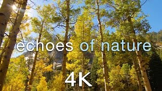 "[4K] ""Echoes of Nature"" A 2 Minute Relaxation Video (ft. Travis Revell) 432HZ"