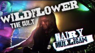 Wildflower - The Cult - Performed By Hairy Mulligan