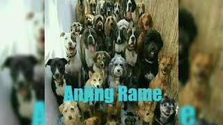 Kumpulan gambar lucu meme anjing terbaru