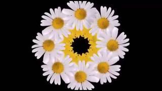 Flower intro