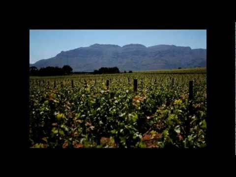 Intro To Cape Town Vineyards SOUTH AFRICA