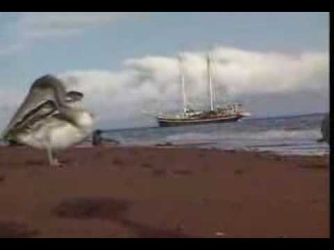 Galápagos Islands – in English.flv