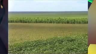 Grilagem de terras ameaça produtores no Sul do Piauí