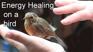 Energy healing on a bird
