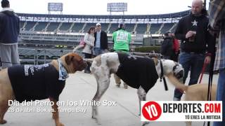 White Sox Dog Day 2014