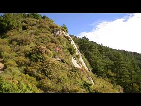 1060630合歡北峰步道0.1K高山杜鵑花況