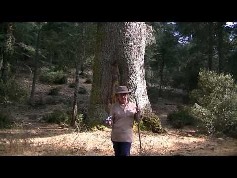 Berber Host & wild camping