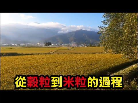 【務農夫婦】第6篇 【水稻150天的生長】 - YouTube