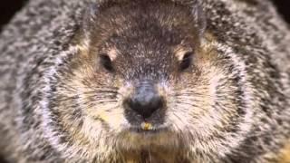 Marmota dia dos namorados -Luan Santana - A outra (DVD Luan Santana Acústico)