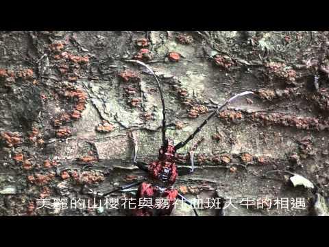 2012神腦紀錄片競賽 社會組佳作《昆蟲心保育情》 - YouTube