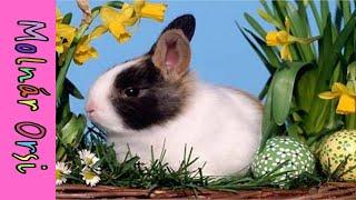 Húsvéti dal - Kis nyuszi, ébredj fel!