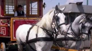 PASAREA  COLIBRI  - Hei tramvai !.avi