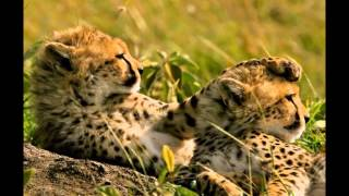 mundo maravilloso africa wonderful world africa relax music musica de relajacion