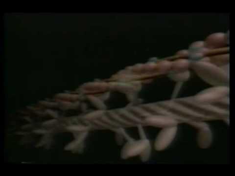 yürüme ve hareket sistemi mucizesi=Kaslar ve kemikler arasındaki işbirliği