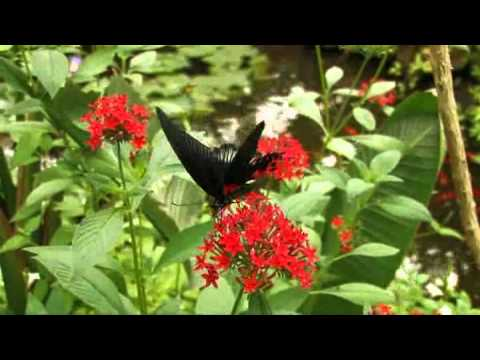 Butterfly World – South Africa Travel Channel 24