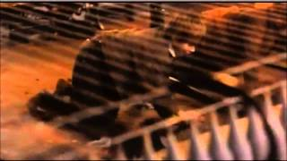 Extraits du film Daens (1992)