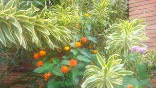 borboleta no jardim...
