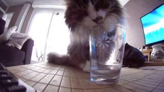 C'est l'apéro pour le chat !!!.MOV