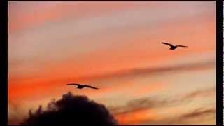 Τρίφωνο - Αυγή Ανθισμένη.....