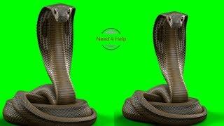 Green screen big snake