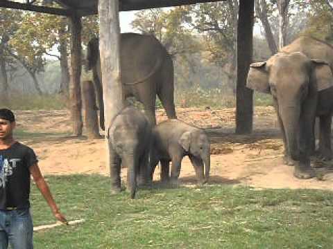 8 Elephant Breeding Center 4.AVI
