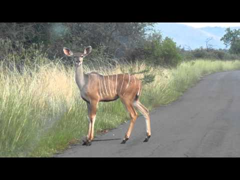 Kudu Crossing