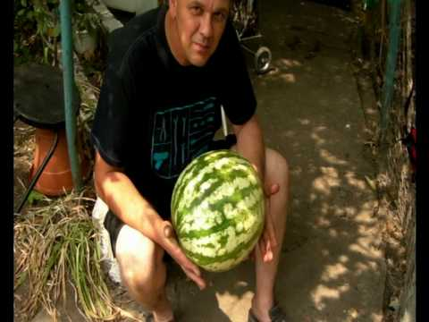 Land Rover Travels in the  Ukraine,…… Soft Drinks and Water Melon