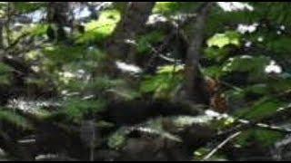 Talking To A Teenage Bigfoot : watch in 1080HD