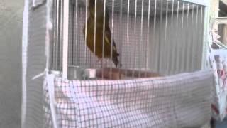 verderon nuevo fichaje 04-05-2012