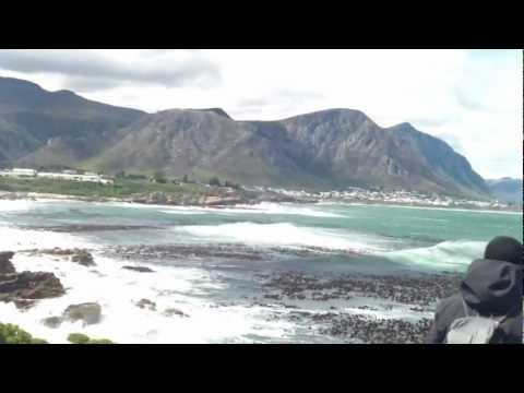 Hermanus, Whale watching , capetown