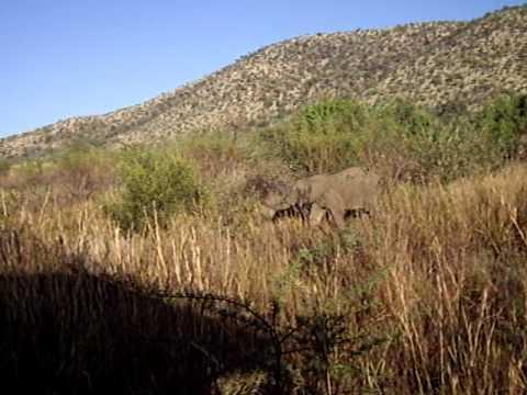 HUMC SA 2009 – Safari