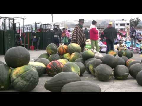 Animal market in Saquisili