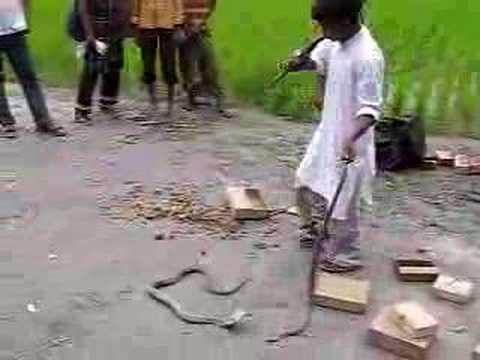 IRFF Bangladesh July '07 – Snake Charmer 1