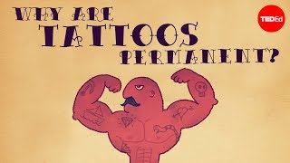 What makes tattoos permanent? - Claudia Aguirre width=