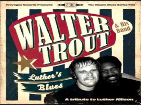 walter-trout-freedom-blues-rock
