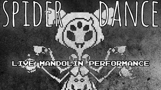 Spider Dance - UNDERTALE ► Live Mandolin Performance by MandoPony