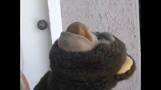 Zertek the angry Monkey